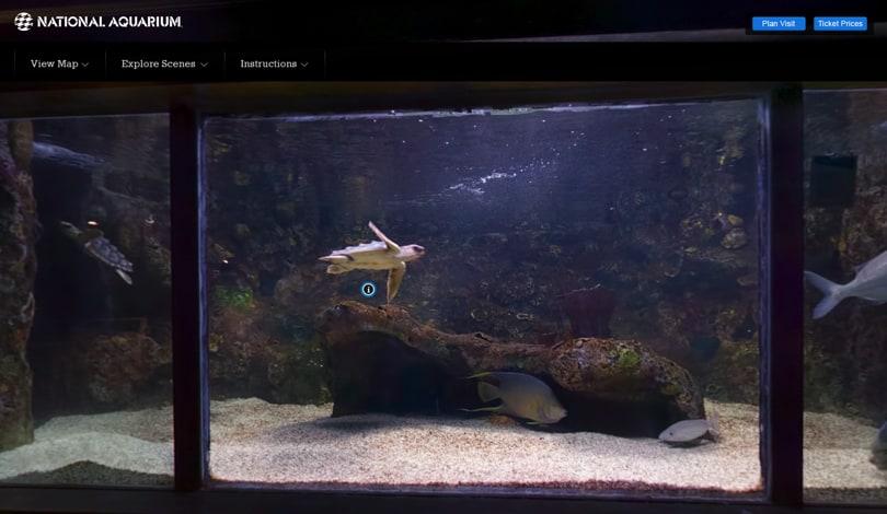 Image Virtual Field Trips - National Aquarium